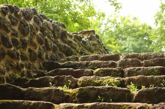 blur close up environment focus